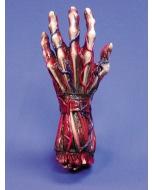 Skinned Left Hand